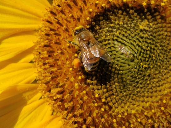 Beeさん.jpg