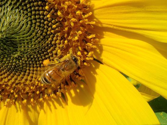 Beeさん2.jpg