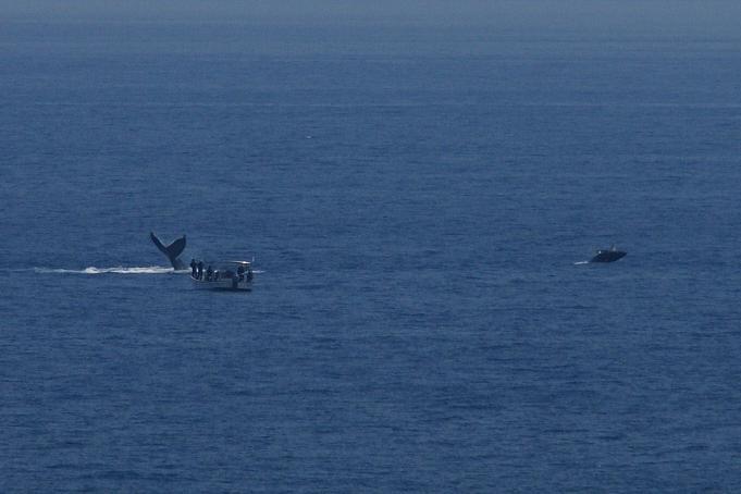 クジラみたび4.jpg