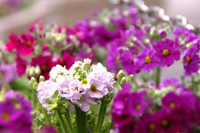 何の花?.jpg