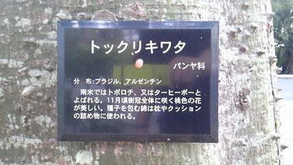 危ない街路樹の名前.jpg