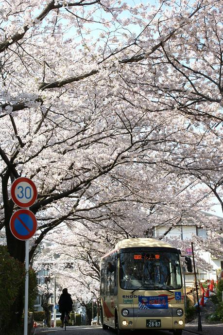 桜坂?.jpg