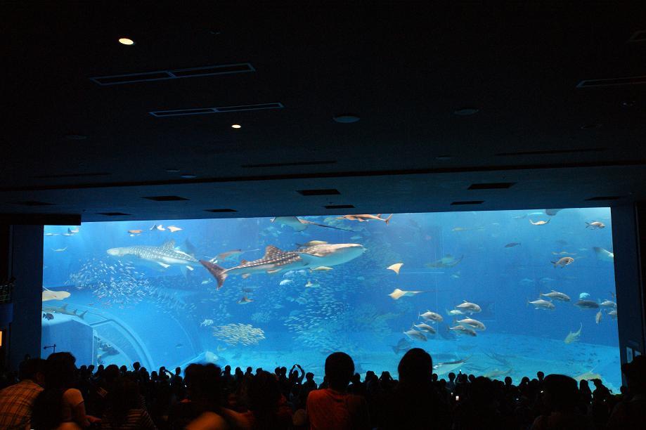 行った事ある方はご存知の通り、給餌のときは一番下のフロアにむちゃくちゃたくさんの人が群がります。 この写真は上の方にある見学席のところから座りながら撮ってますが、この位置からだと高すぎて、ジンベイザメが餌食べてるところがよく見えないんですよね。