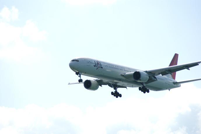 JAL便.jpg