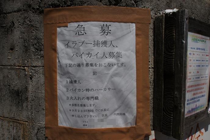 イラブー捕獲人募集.jpg